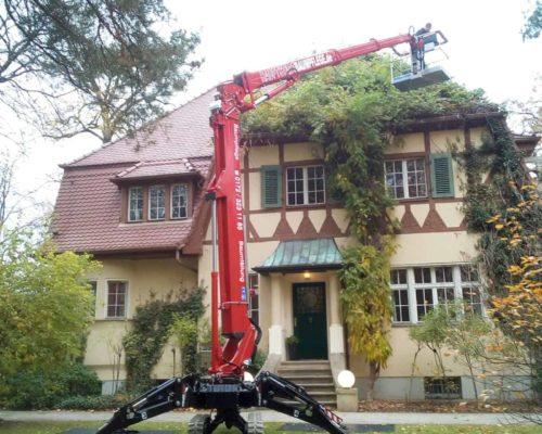 Baumentfernung Haus