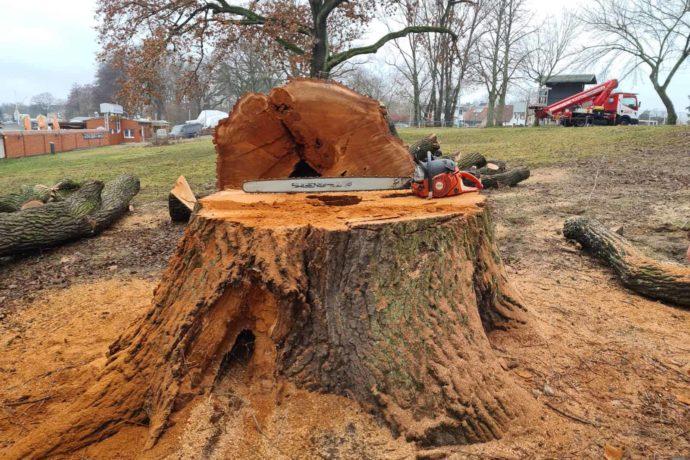 Baum Fällen Säge