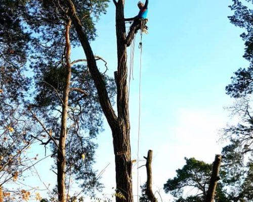Baum Erfolg