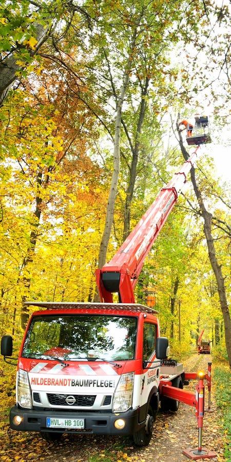 Baumfällung im Wald