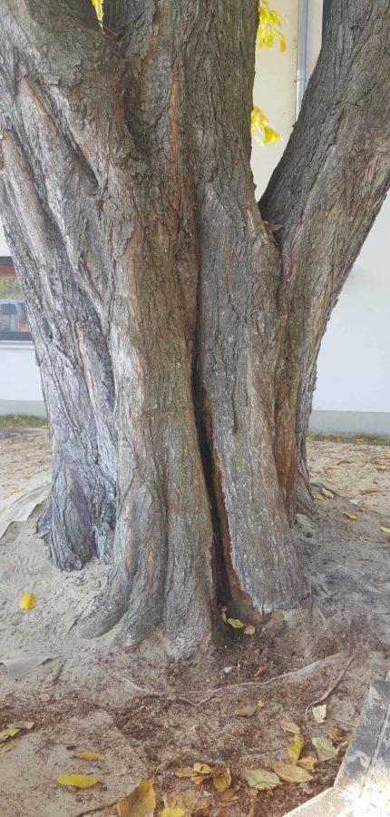 Baum Kontrolle brandenburg