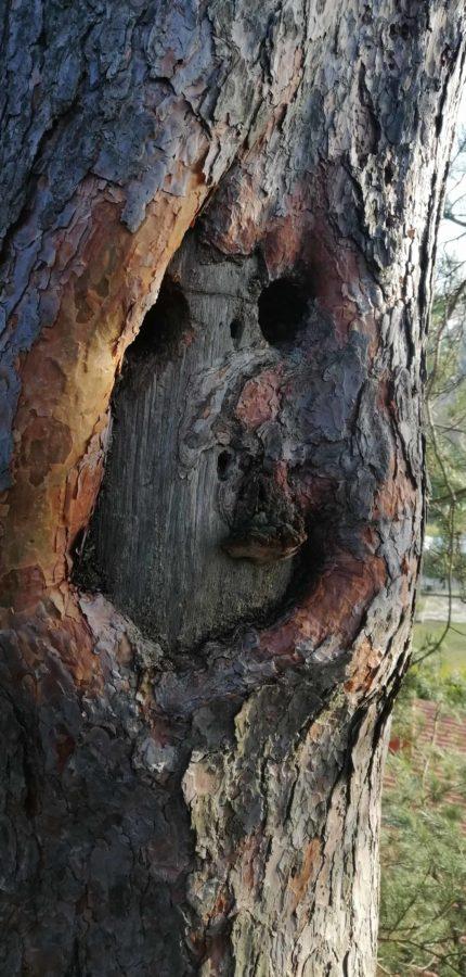 Baum Kontrollieren Brandenburg
