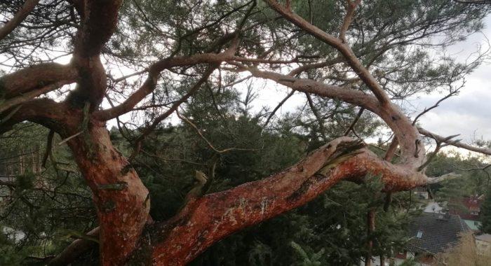 Baumkontrolle
