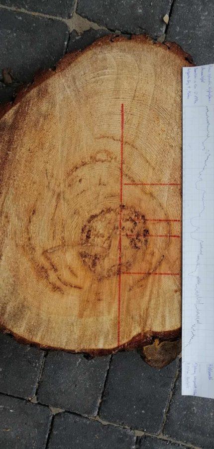 Baumkontrolle Gutachten