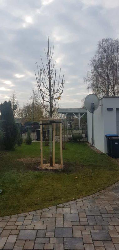 Baum pflanzen Grundstück