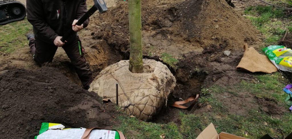 Baum Eingraben