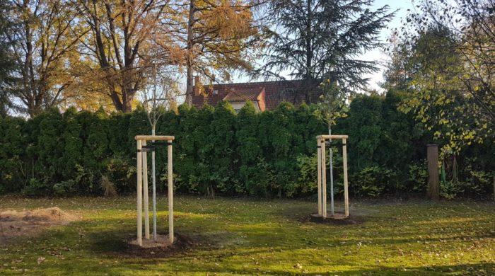 Baumpflanzung Garten