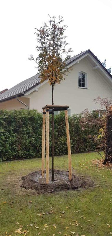 Baumpflanzung Endergebnis