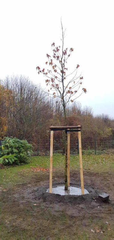 Baum Pflanzen Hildebrandtbaumpflege