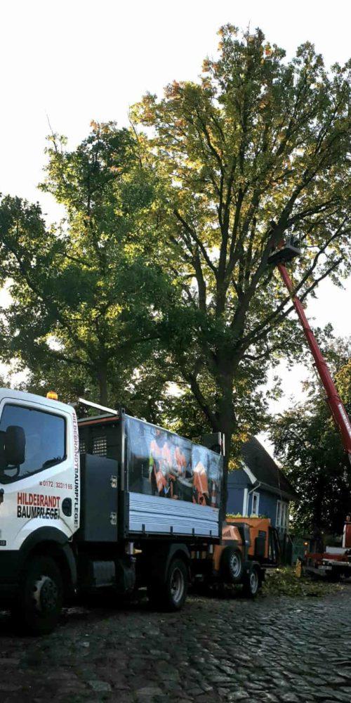 Baumpflege in der Stadt
