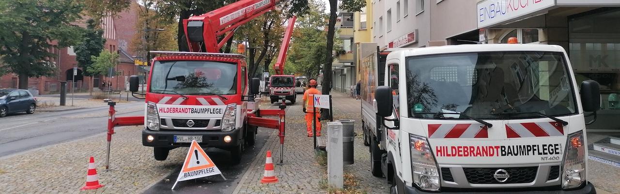 Berlin Absicherung Baumpflege Straße