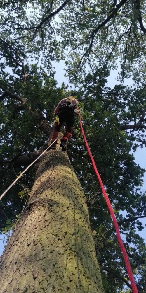 Baumpflege am Baum