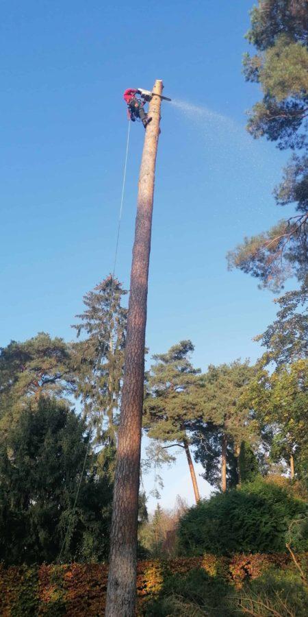 Großen Baum Fällen