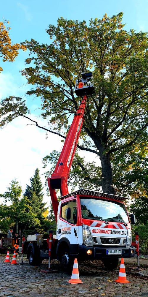 Kronensicherung Baumpflege