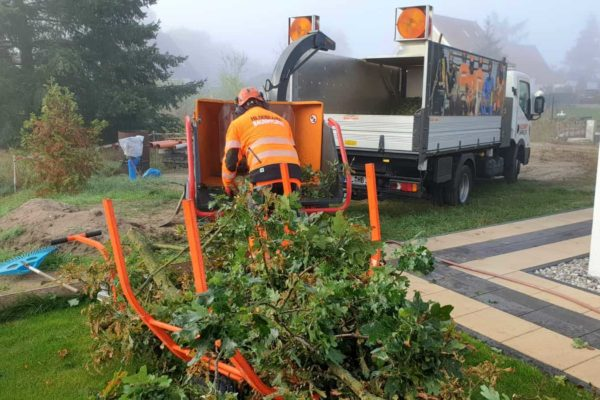 Pflege von Bäumen